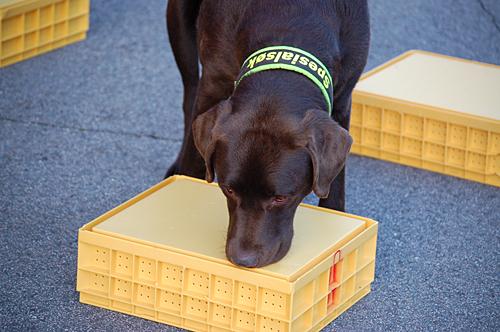 Karo markerer på kasse